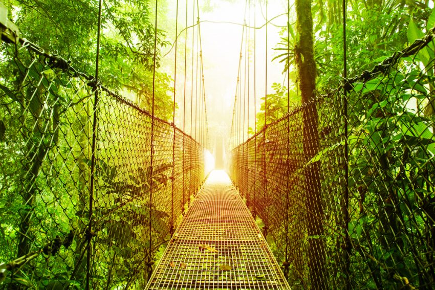 The Best Of Costa Rica Independent Adventure (10 Days). Arenal Hanging Bridges park of Costa Rica