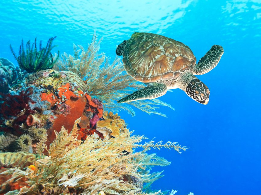 Top-Rated Tourist Attractions in Bahamas. Turtle and coral
