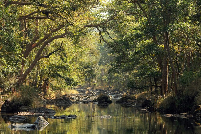 India's Best Wildlife Safari Parks. Stream in Kanha National Park, Madhya Pradesh, India.