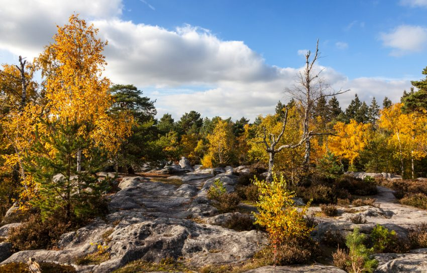 Great Places to Experience Fall Foliage. Beautiful autumn landscape in the Fontainebleau forest located in France close to Paris.
