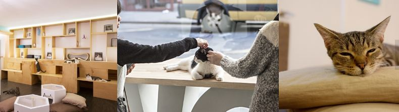 The Cutest Pet Cafes around the Globe